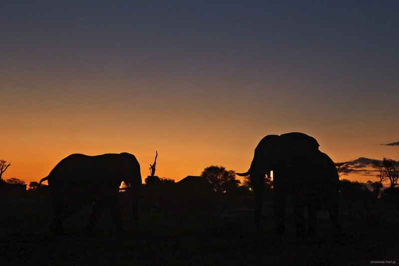 Elephantsandlodge sunsetth