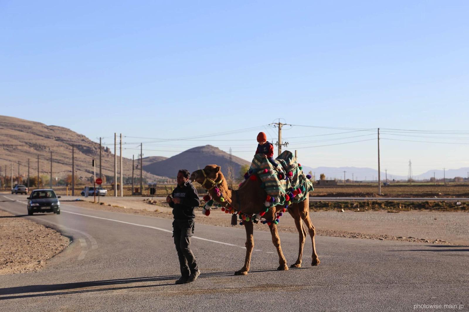 観光用のラクダ