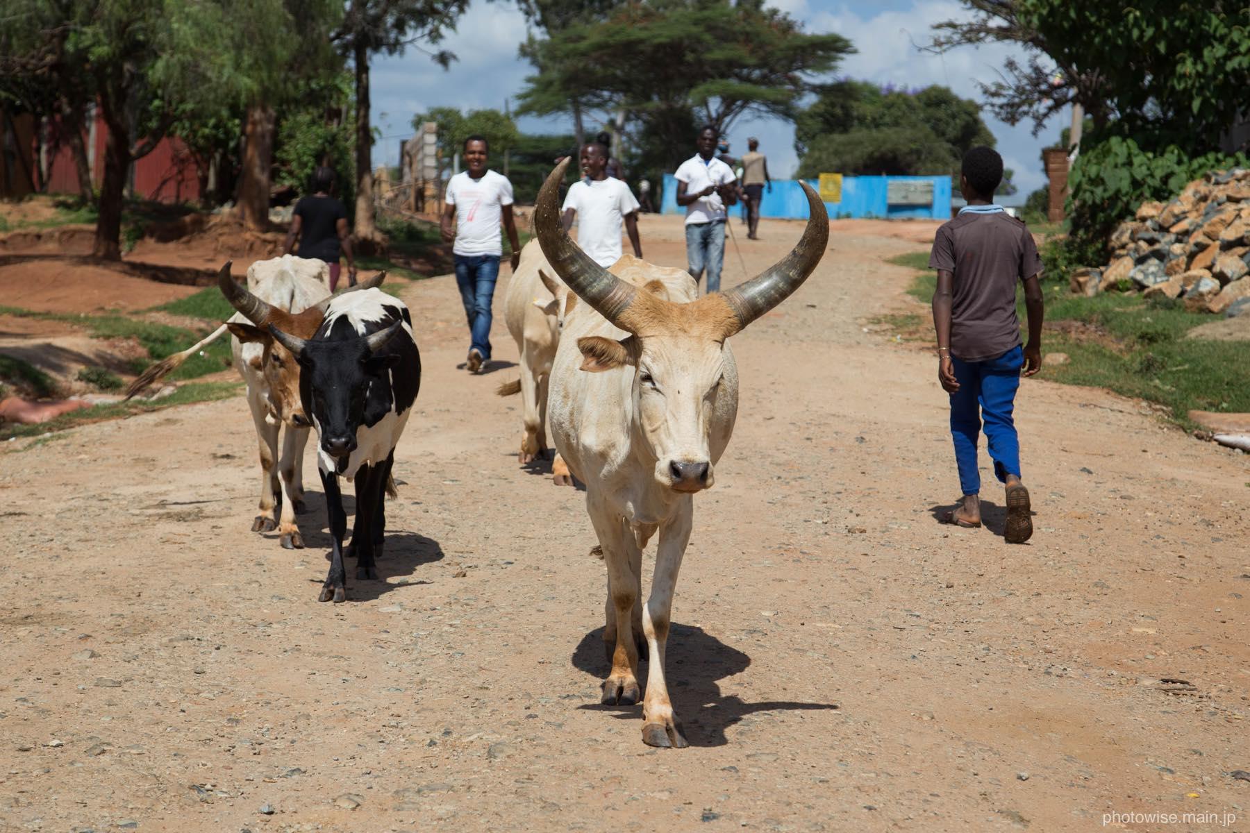エチオピア南下