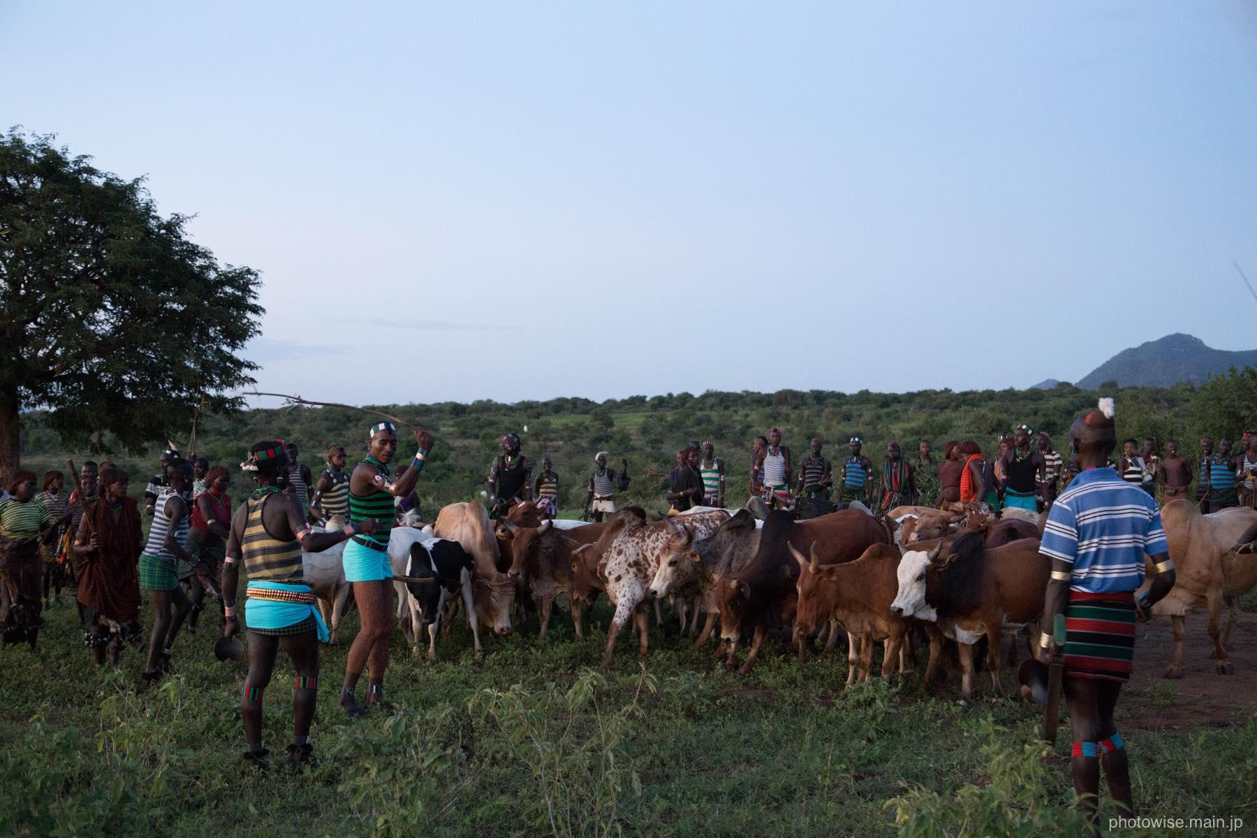 牛を並べる