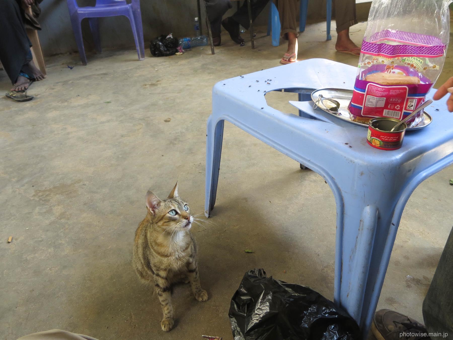 缶詰を狙うネコ