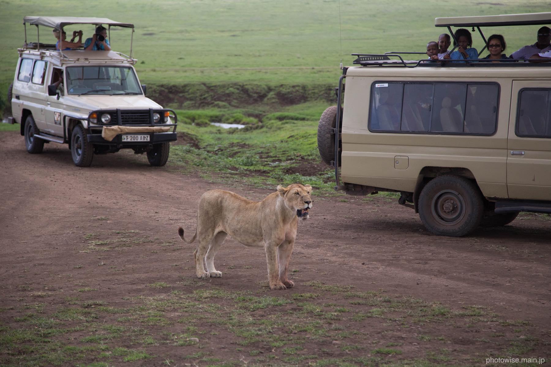 ライオンとジープ