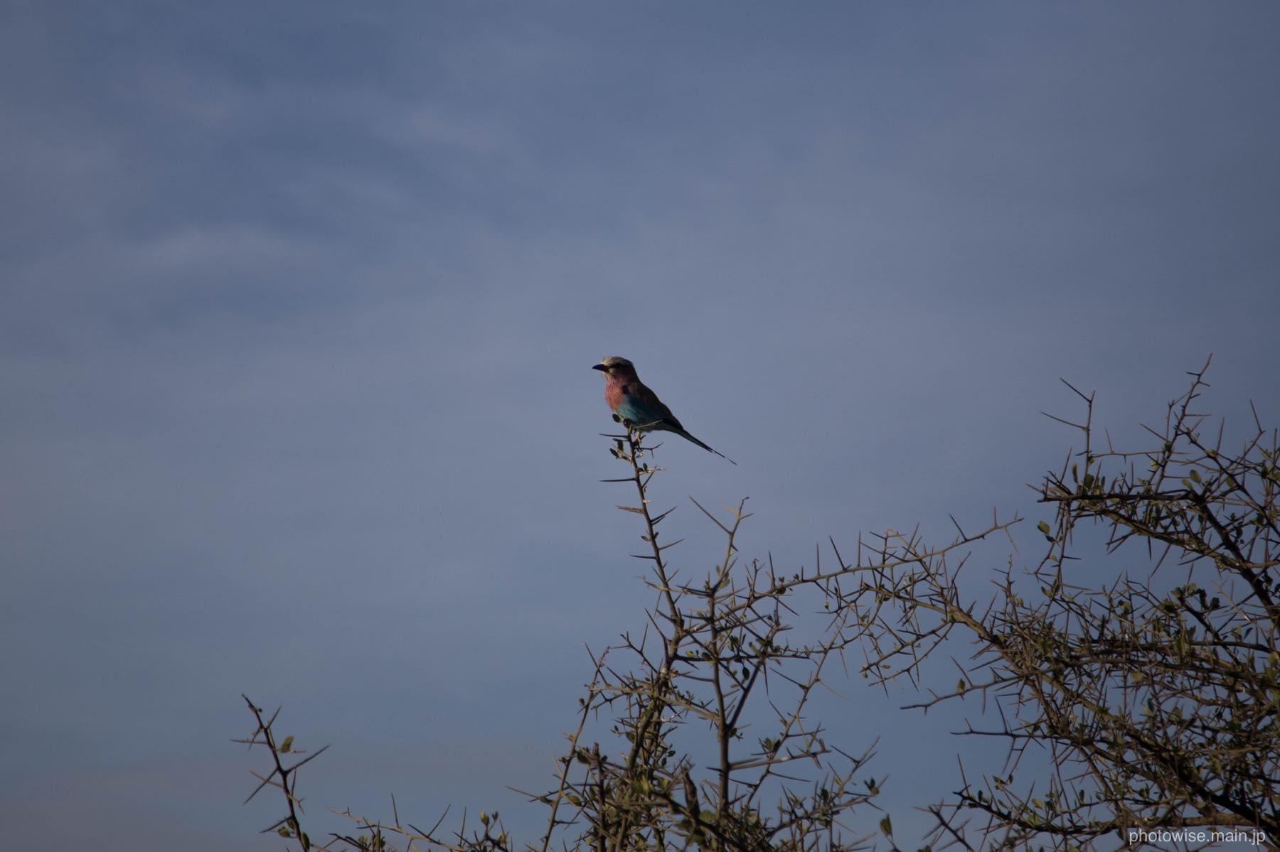 美しい野鳥