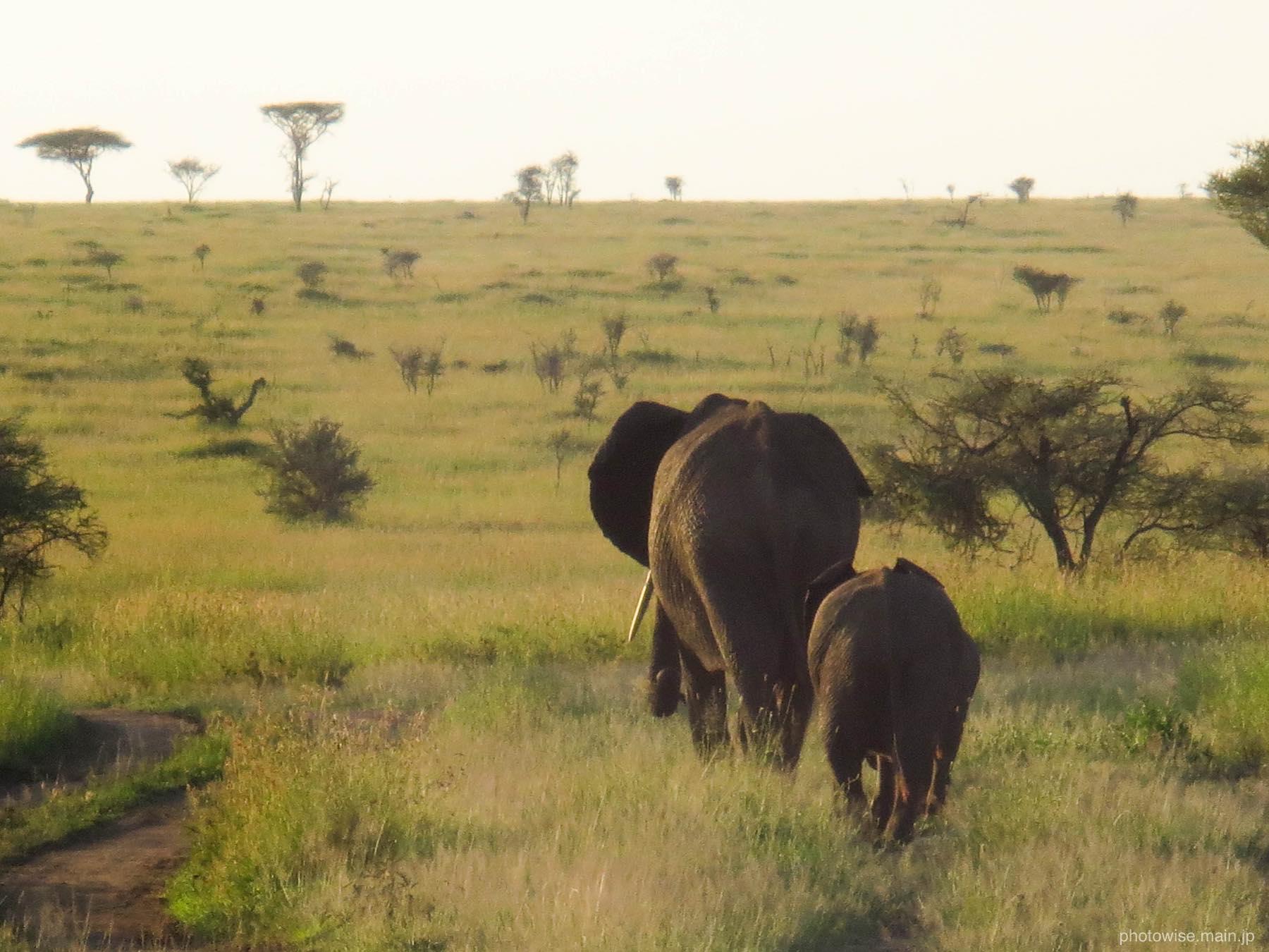 ゾウのたくましさを知る