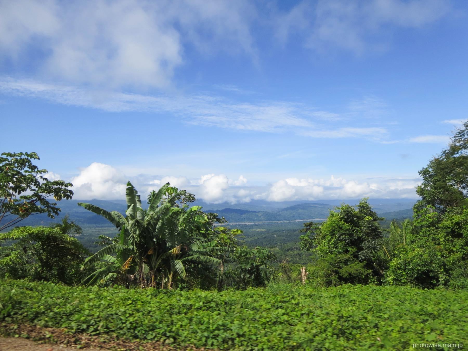 バナナの木などが生い茂る