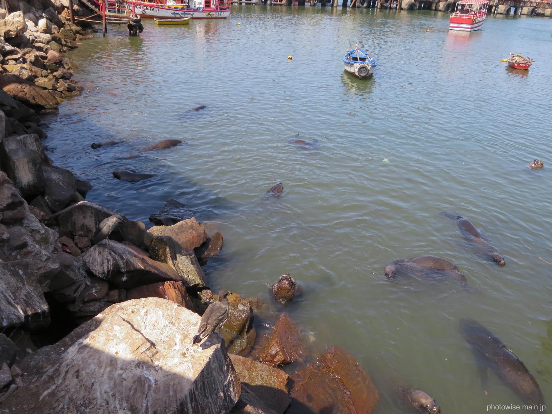 アリカ漁港の様子