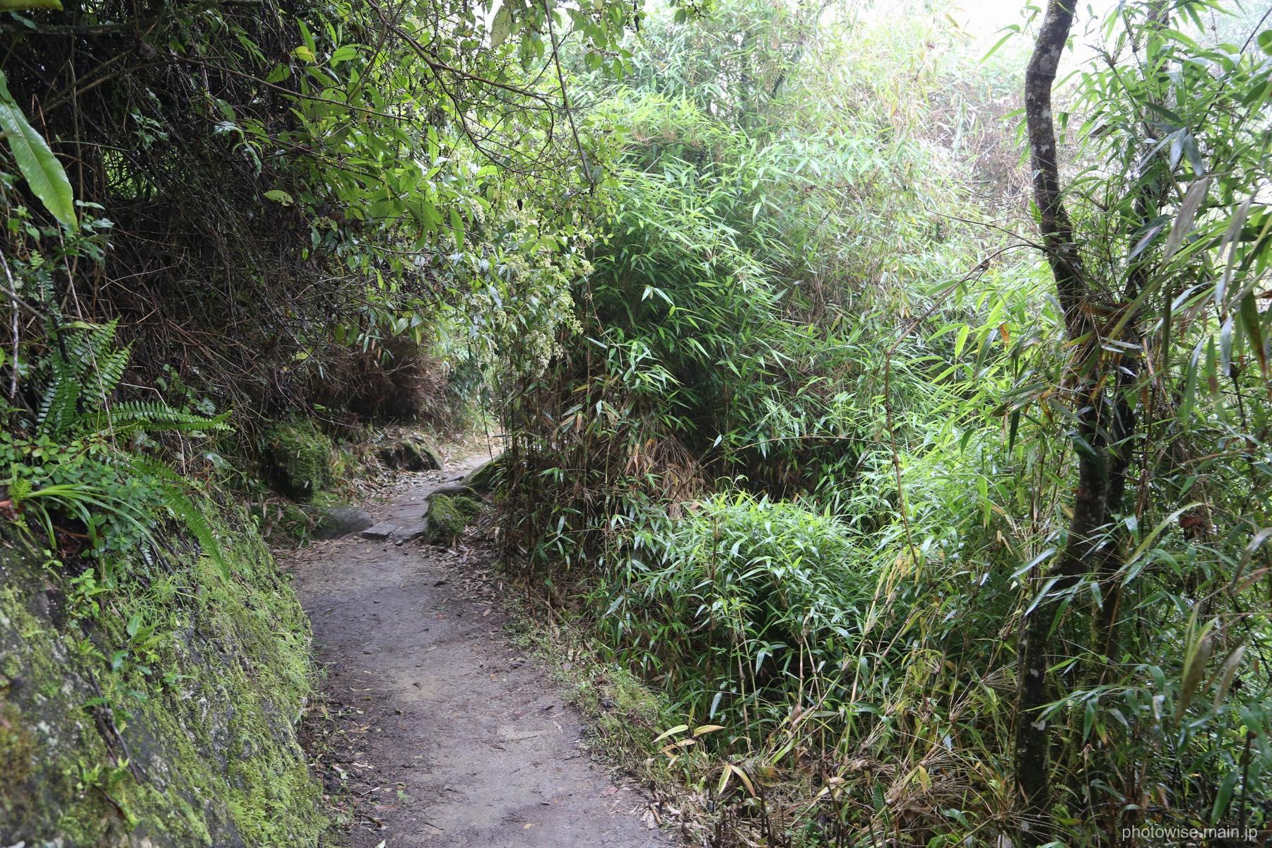 藻岩山みたいな山道