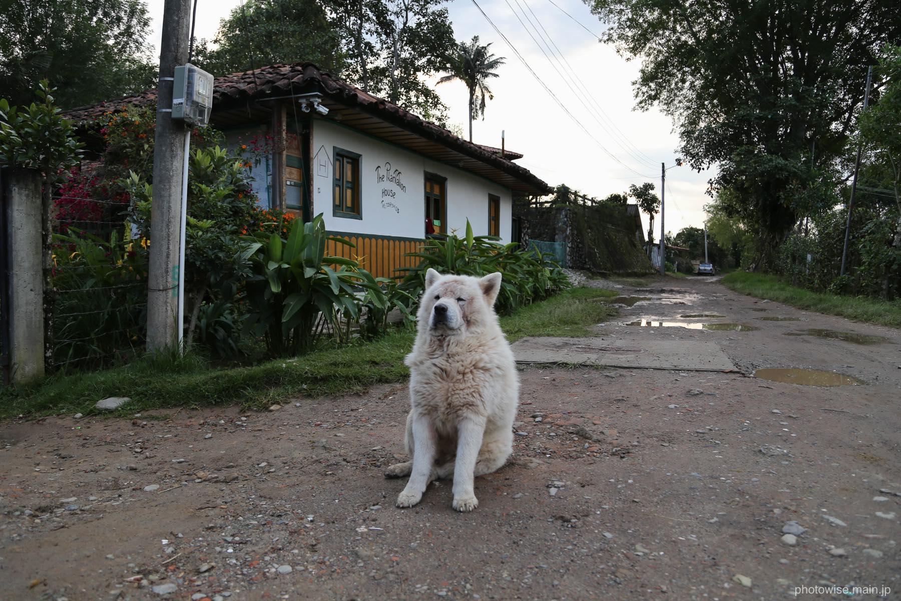 plantation houseの犬