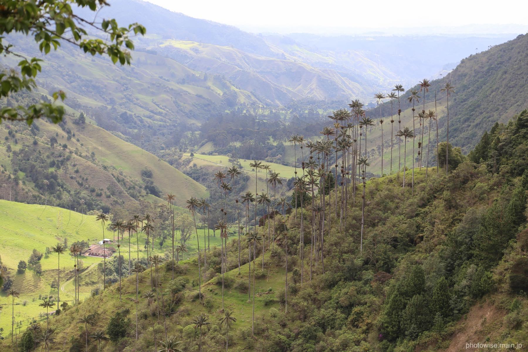 ココラ渓谷
