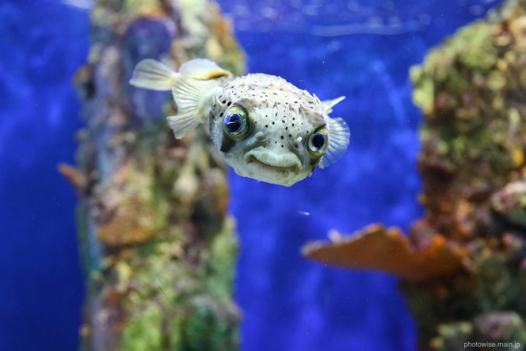 カリブの熱帯魚