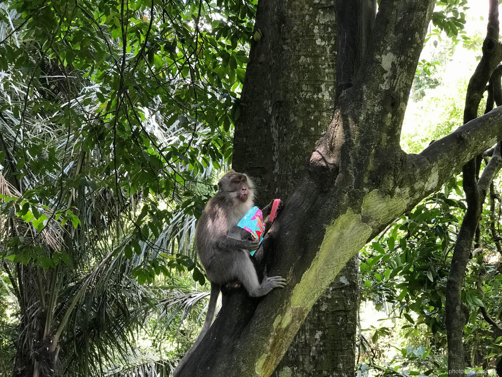 ウエハースを食べる猿