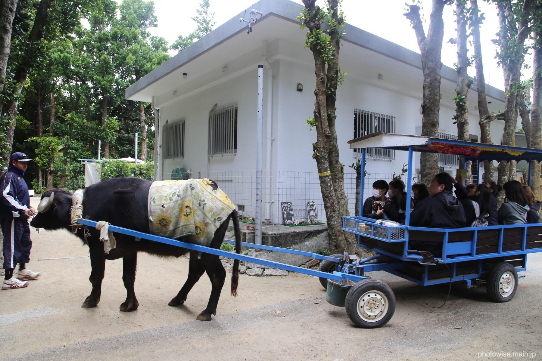 水牛の馬車