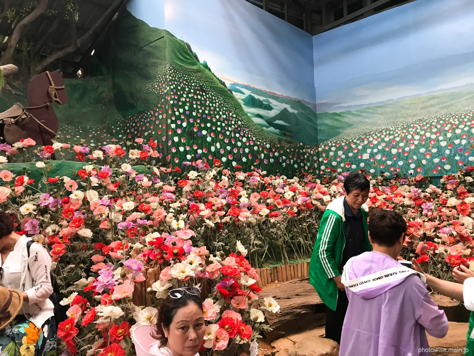 アヘンの花と撮影コーナー