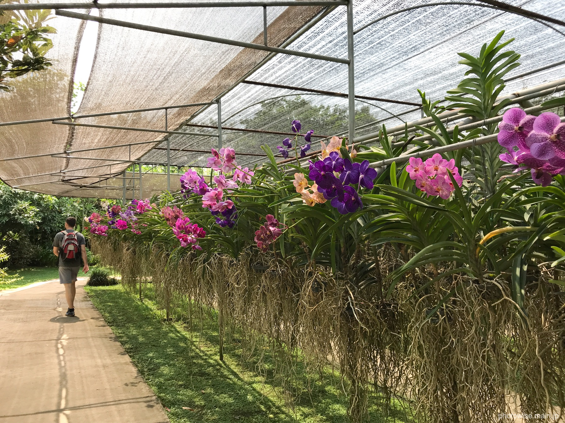 Butterfly and orchid farm