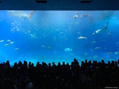 美ら海水族館の大水槽